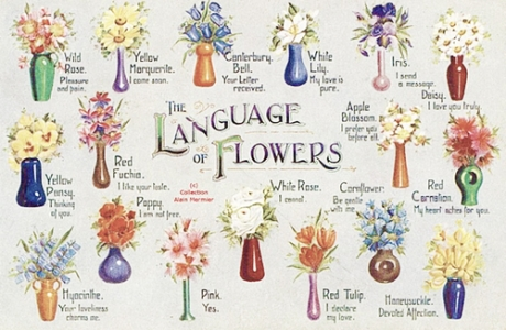 43774-The-Language-Of-Flowers